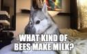 Jakiego rodzaju mleko robią pszczoły?