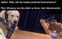Szczęście psów