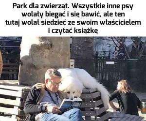 Pies introwertyk
