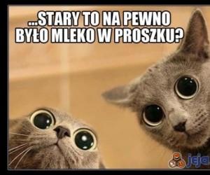 Koty i mleko w proszku...