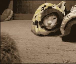 Kotowąż