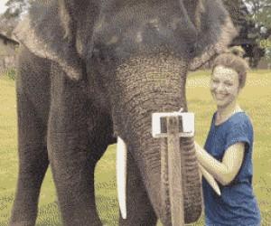 Słonie są coraz bystrzejsze