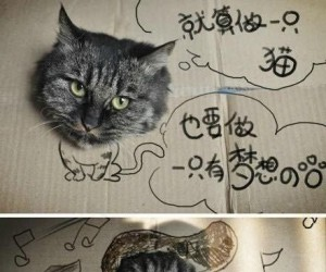 Kartonowy kot