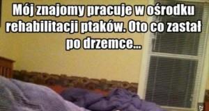 O, sowa!