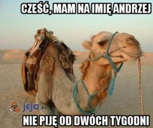Wielbłąd Andrzej nie pije od...