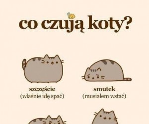 Co czują koty?
