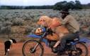 Owca na motorze