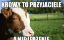 Otaguj swoją krowę