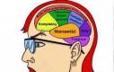 Mózg femin(az)istki