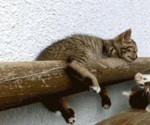 Hej wstawaj! Dobra, to ja spadam.
