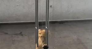 Wpuść nas! To my, koty podwórkowe...