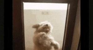 Będę tańczyć dopóki mnie nie wpuścicie!