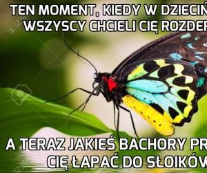 Ciężkie życie motyla