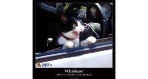 Whiskas!