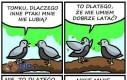 Dlaczego inne ptaki mnie nie lubią?