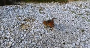 Dzika wiewiórka atakuje!