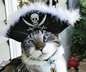 Kot pirat