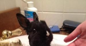 Bez mycia głowy proszę