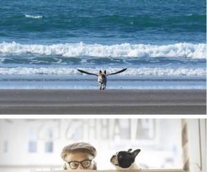 Zdjęcia psiaków w odpowiednim momencie