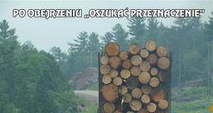 Kłoda drewna mnie przeraża