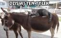 Wielkie plany kota