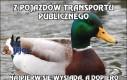 Z pojazdów transportu publicznego