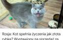 Przeciwnik dla kota Bożydara