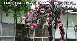 Stado ogrodowych flamingów potrafi...