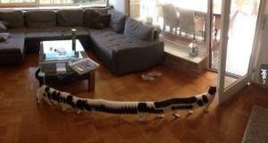 Kot przebiegł przez zdjęcie panoramiczne