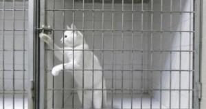 Prison Break - Ucieczka to dopiero początek
