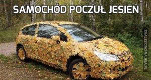 Samochód poczuł jesień