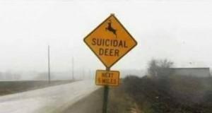 Jelenie samobójcy
