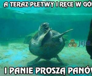 Roztańczony żółw