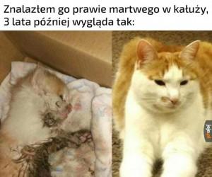 Kotki są najlepsze