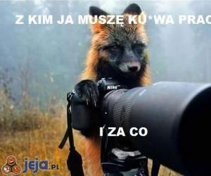 Lis fotograf