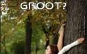 Na Groota wszystkie lecą