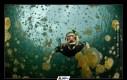Meduzy z Jellyfish Lake (