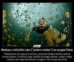 """Meduzy z Jellyfish Lake (""""jezioro meduz"""") na wyspie Palau"""