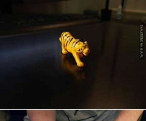 Stara zabawka tygrysa zyskuje nowe życie