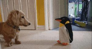 To pingwin, ratuj się kto może!