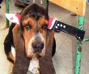 Pies z nożem