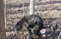 Pies po zjedzeniu gumy balonowej