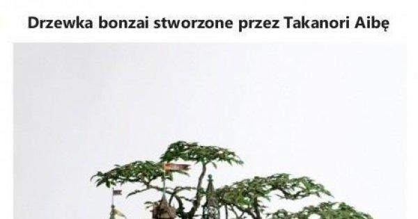 Niesamowite Drzewka Bonzai Jejapl