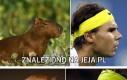Rafael Nadal, czy może kapibara?
