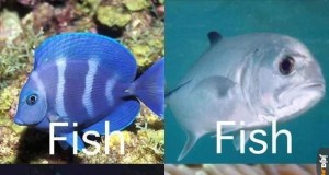 Rodzaje ryb