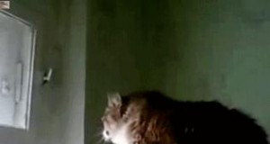 Sprytny kociak