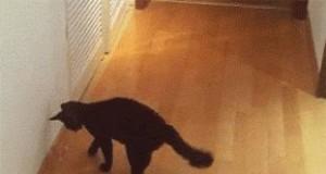 Kot ratunkowy