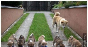 Dumni psi rodzice