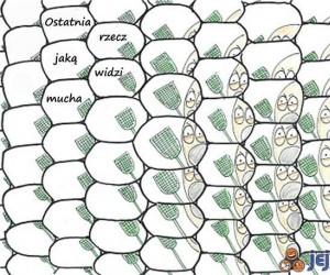Ostatnia rzecz jaką widzi mucha