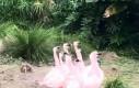 Flamingowy marsz